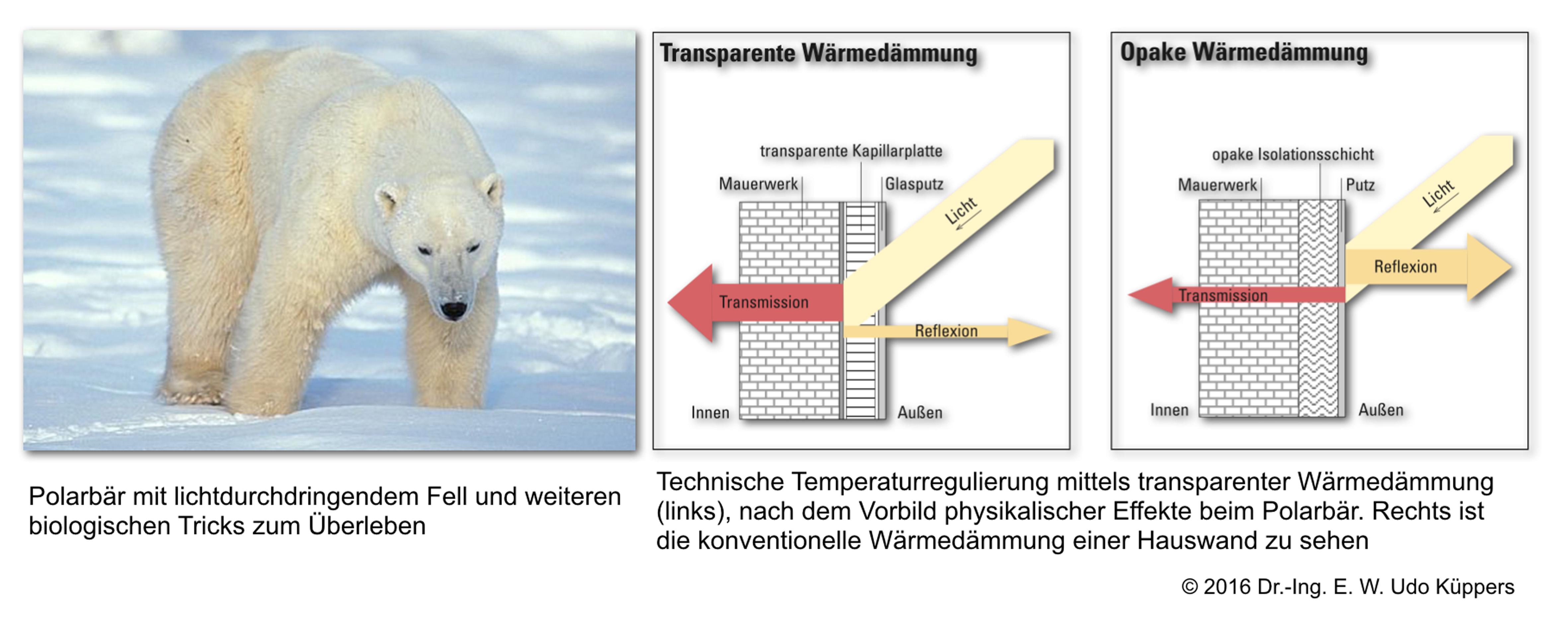 Abbildung 4: Multifunktionsfell des Polarbärs gibt funktionale Hinweise auf intelligente technische Hausdämmung