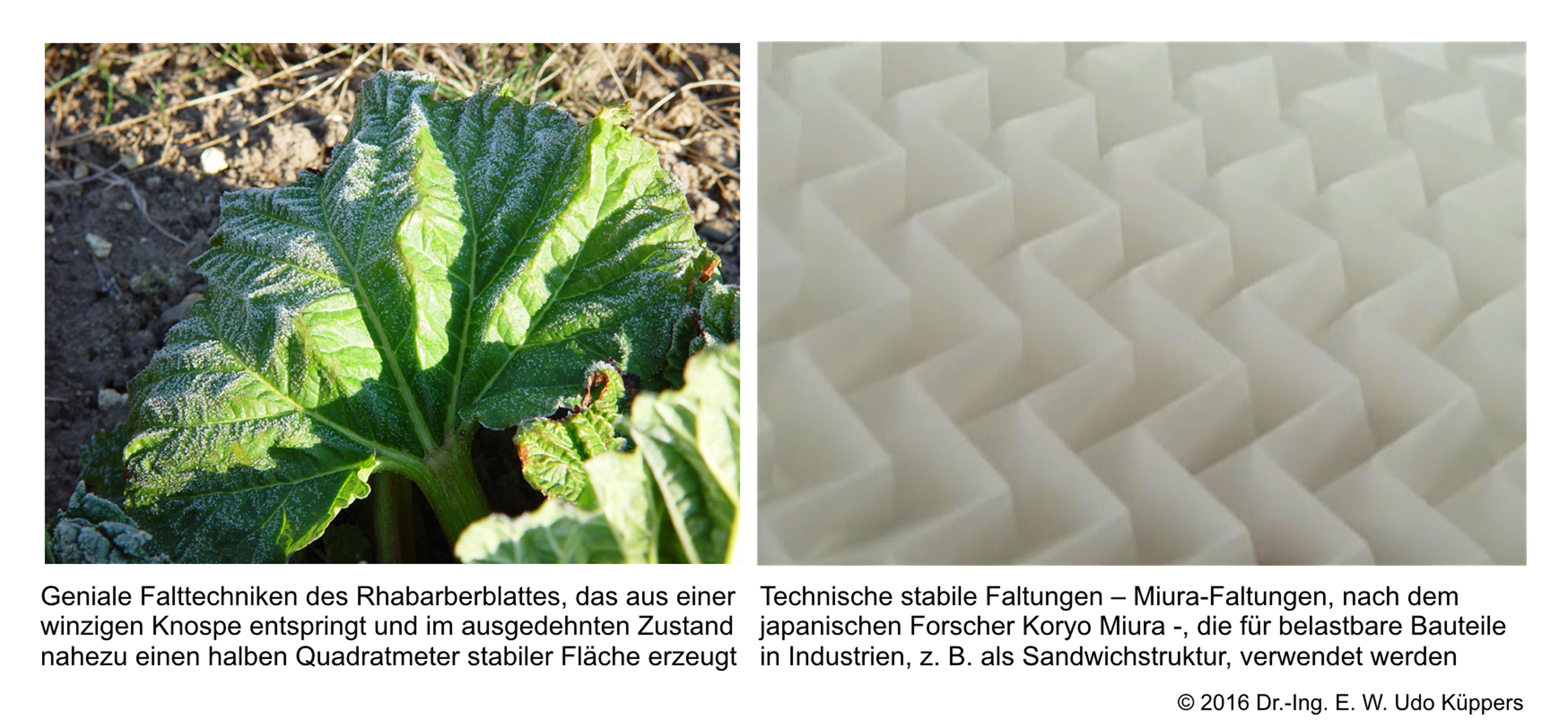 abb-5-rharbarberblatt-miura-faltung-600pi